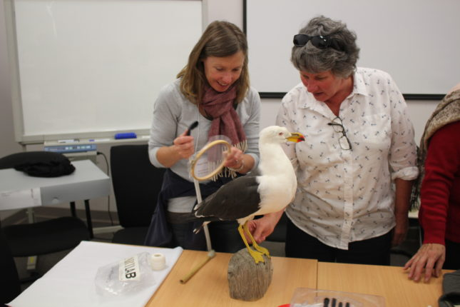 Two women vacuum cleaning a stuffed seagull.