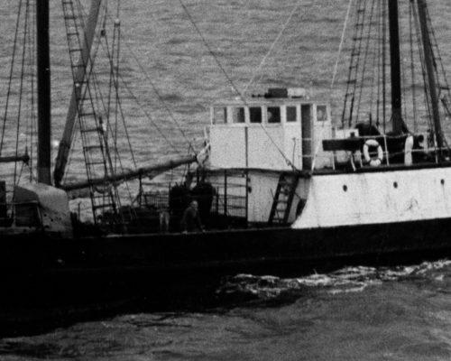 Nelcebee 1965